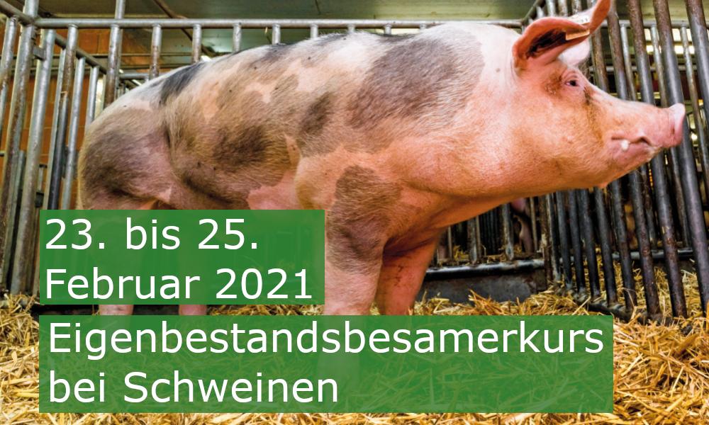 Besamungskurs Schwein