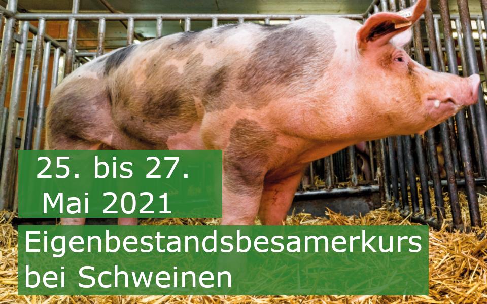 Eigenbestandsbesamung Kurs Schwein